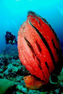 Diving in Wakatobi. www.sunnyindonesia.com.