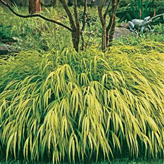 Pin by julie cantrell on garden and yard pinterest for Best ornamental grasses for full sun