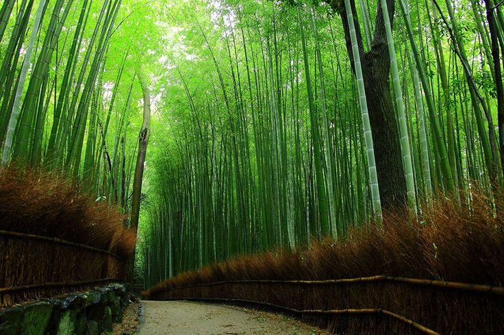 竹林の道/京都