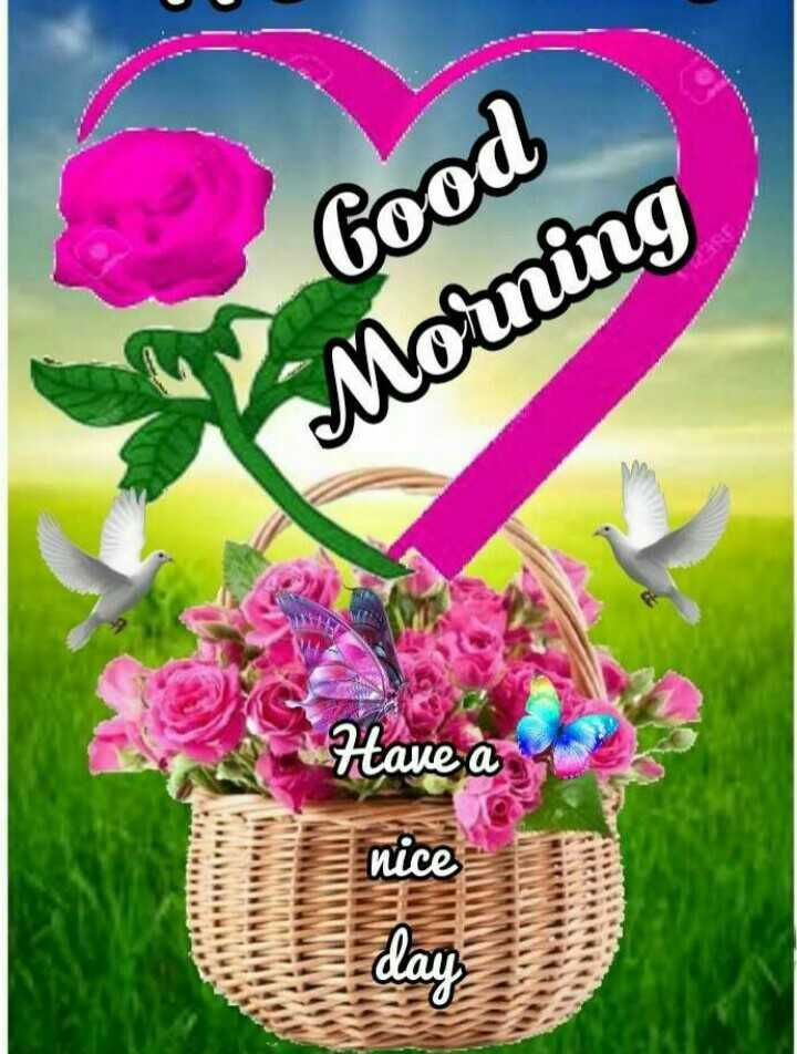ಶಭದಯ Good Morning Have A Sharechat Greetings Good