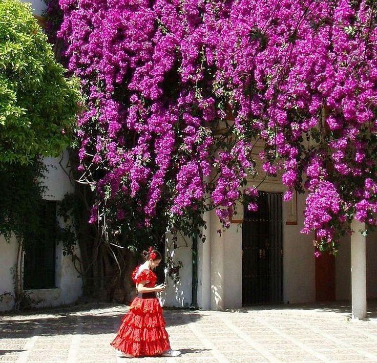 Букет цветов, цветы в испании розовые