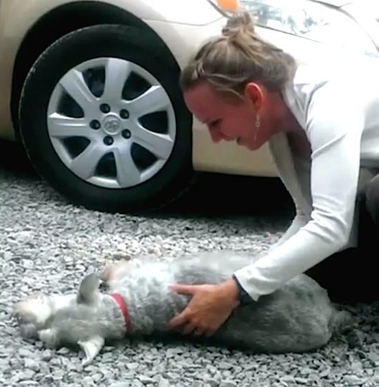 DOG PASSED OUT AFTER SEEING HIS OWNER AFTER YEARS TALKING ABOUT - Dog passes owner returns 2 years