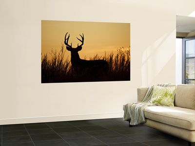 Animal Wall Murals Posters at AllPosters.com