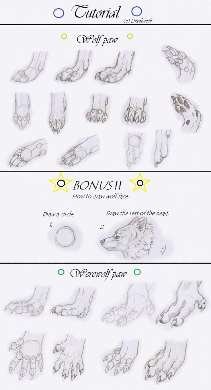 Werewolf's Paw (with Bonus) By Fc06 On  Deviantart