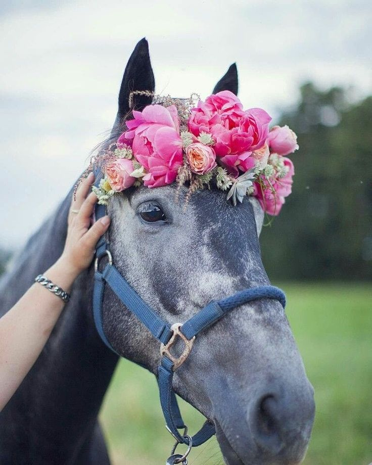 Лошади милые картинки
