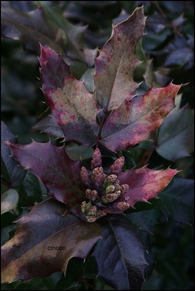 ~Autumn's Purple Haze~