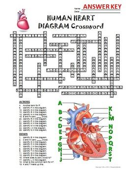 Heart Crossword with Diagram {Editable} | Štúdium