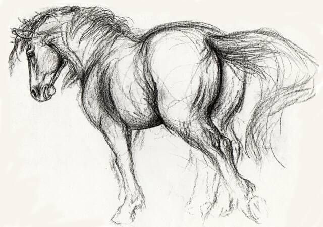 horse gesture | Welcome Friends, Family and Equine Art Enthusiasts