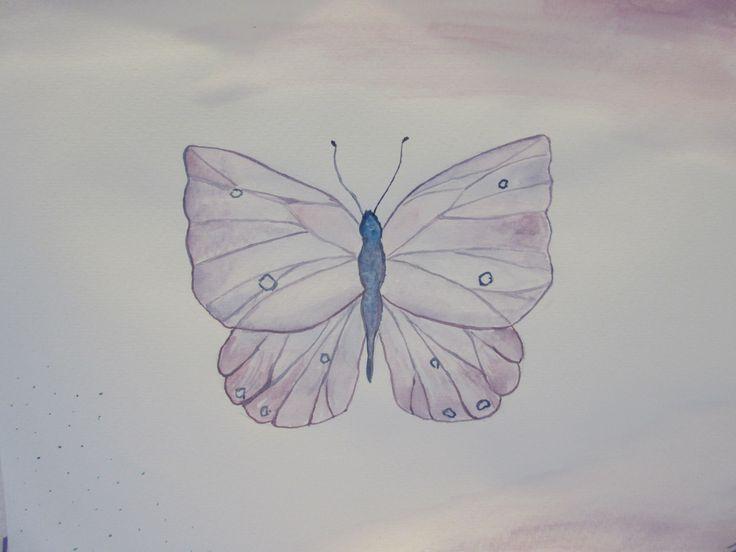 Lepidoptera <3