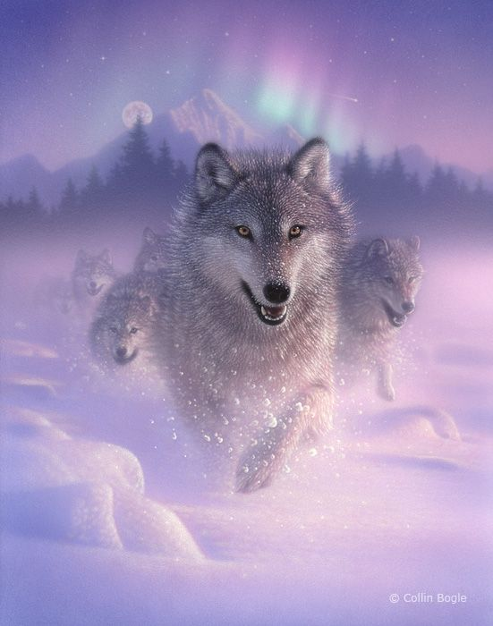 Wolf Paintings, Wolf Art Prints, Wolves Painting Artist                                                                                                                                                                                 More