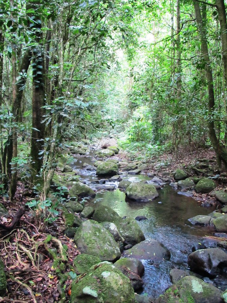 Relax in the Rainforest of the Gold Coast Hinterland