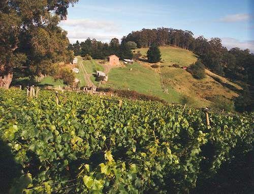 Hartzview Vineyard (WB)
