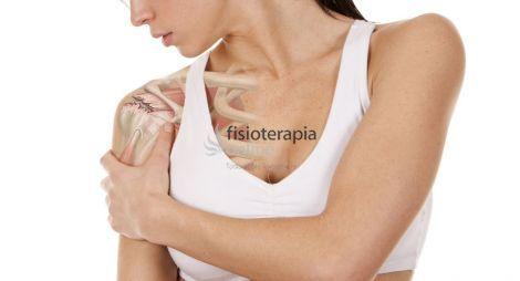 Elmanguito de losrotadoreses un grupo de cuatro músculos (supraespinoso,subescapular, redondo menor y elinfraespinoso) y tendones responsables de ayudar a estabilizar y mover la articulación del hombro.