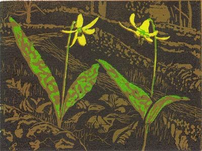 Troutlily, reduction wood engraving, 4 colour