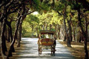 Doğanın huzur dolu güzelliğinde İstanbul'a yakın bir kaçamağa ne dersiniz ! http://www.buyukadaotel.com.tr/  #büyükadaotel #büyükadaotelleri #büyükadabalayıotelleri #büyükadatoplantıotelleri #turizm #seyahat #gezi #tatilhome