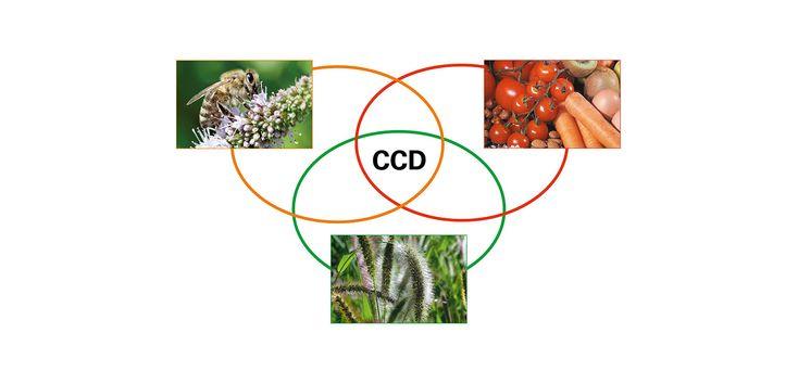 Identyfikacja reakcji krzyżowych (cz. 1: Klasyczne testy serologiczne I) - Alergiczne.info
