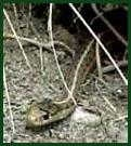 Saw this cute little Wandering Garter snake at Fish Creek Provincial Park.  Ben freaked out.  Ben is a wuss.