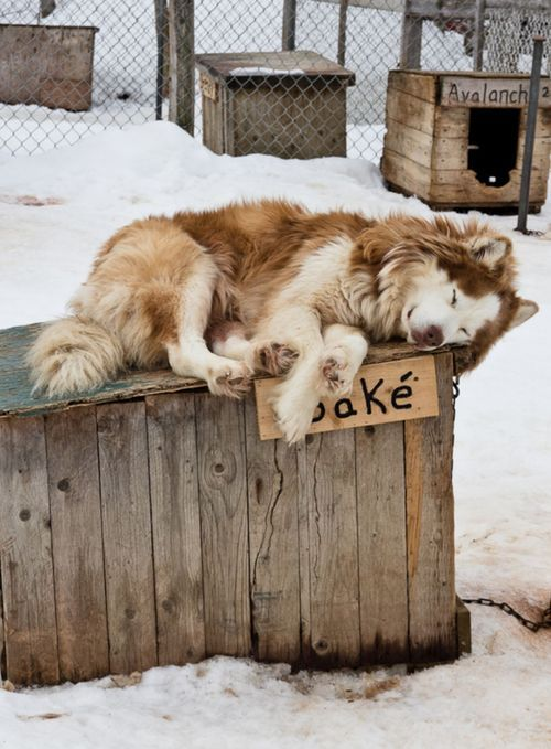 native american indian dog | Tumblr