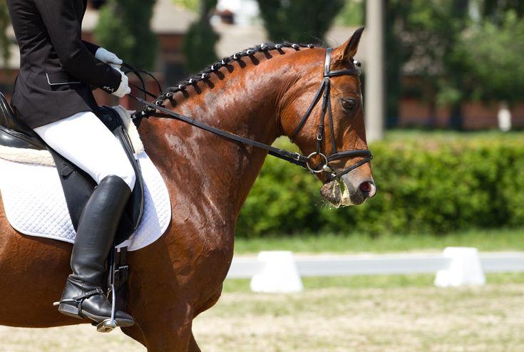 botas de montar, botas camperas mujer, botas camperas, hipican, botas equitacion, botas cuero mujer