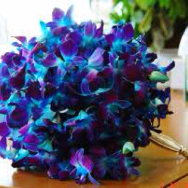 Turquoise & purple will be my wedding colors someday :)
