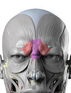 Anatomy Next Blog - Wrinkles