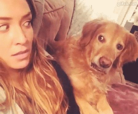 When you say that ONE THING he told you not to say in front of everyone. | 11 Ways You Are Absolutely Embarrassing Your Pet