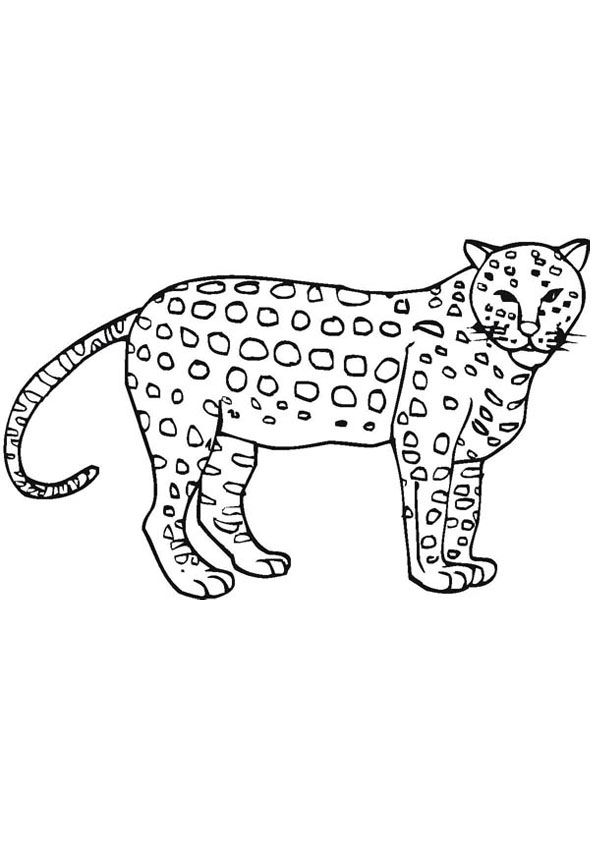 Cheetah Coloring Pages Coloring Pages Free Printable Coloring Pages Color