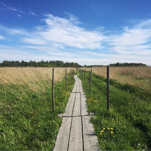Where will your path take you this week? Beautiful photo by @satusilvia from Lammassaari, Helsinki #visitfinland #ourfinland