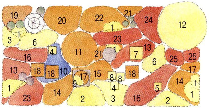 16. Молиния голубая 'Variegata' (4) 17. Космея дваждыперистая (6) 18. Лилия королевская (12) 19. Эхинацея пурпурная (3) 20. Шток-роза розовая (3) 21. Вербена бонарская (3) 22. Живокость высокая (3) 23. Дендрантема крупноцветковая (6) 24. Анемона японская (6) 25. Клопогон 'Armleuchter'