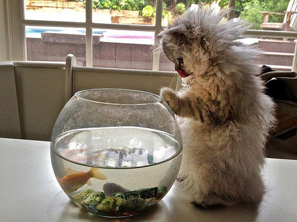 I lv fish :-)