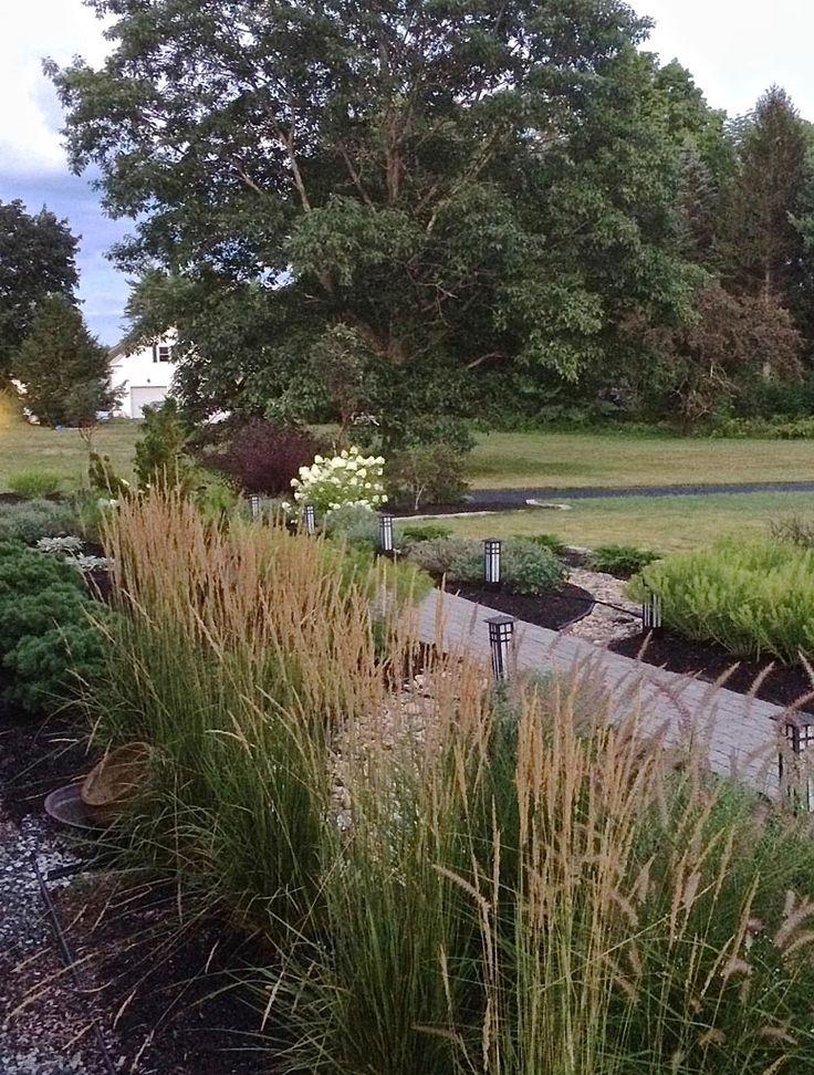 15 best red fern landscape design projects images on for Ornamental grasses for front yard