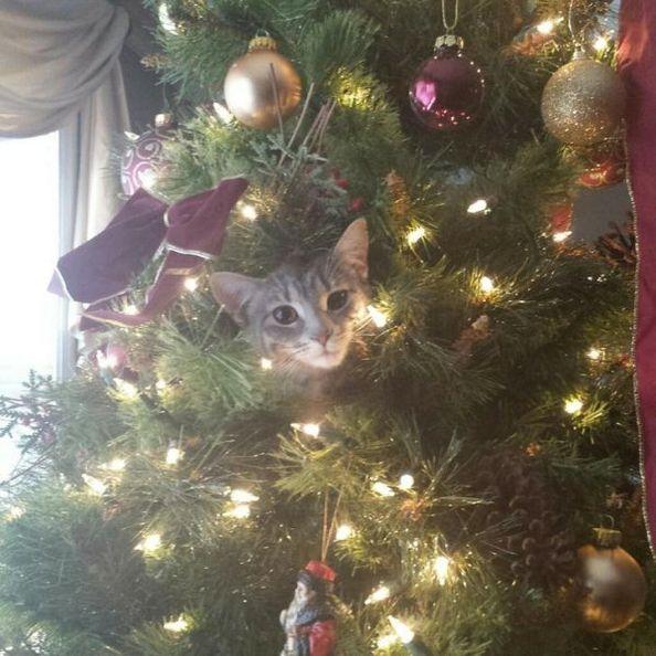 Cats Vs Christmas Trees.Cats Vs Christmas Trees 33 Pics Memes Christmas Cats