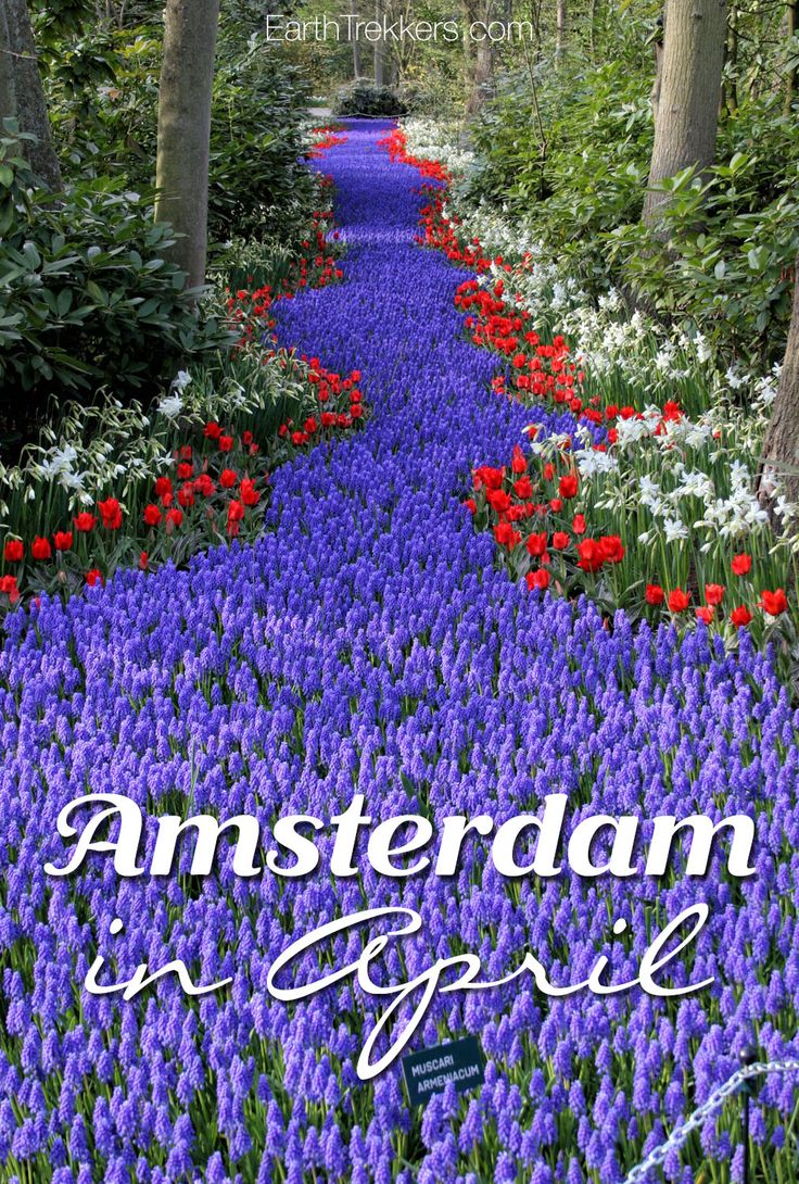 Amsterdam in April, with a visit to Keukenhof to see the tulips blooming.