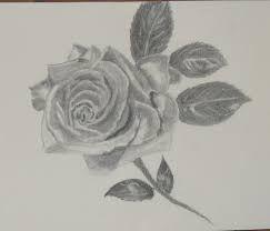 Resultado de imagen para rosas a lapiz