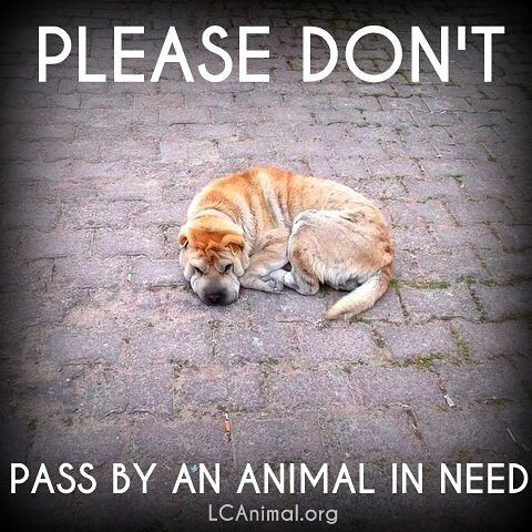 Help those that can't help themselves❣️ Don't look the other way‼️ ❤️