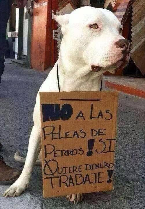 No al maltrato Animal!!!