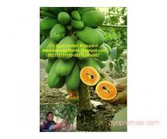 UD Lestari Jaya #ayopromosi www.ayopromosi.com