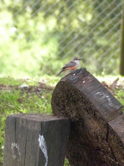 un visitante algo pequeño pero con una gran belleza