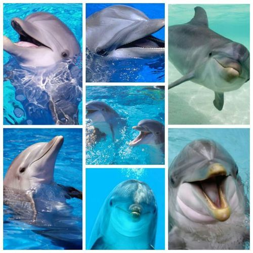 SHAME!!  The Horror of Japan! http://www.dailymail.co.uk/news/article-2541803/Japanese-fishermen-catch-25-dolphins-pod-250-prepare-mass-slaughter.html