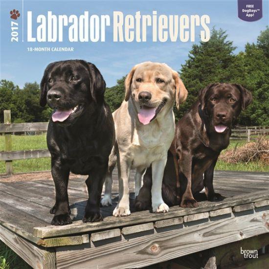 Honden kalender 2017 Labradors. Een luxe full colour kalender van 120 grams glossy papier met 13 verschillende kwaliteitsfoto's van uw favoriete rashonden. Elke kalendermaand heeft ruimte voor uw persoonlijke notities. De kalender is circa 30 x 30 centimeter en heeft 24 pagina's.