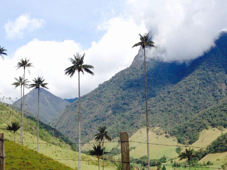 Valle de Cocora - Quindio Parque nacional en Colombia