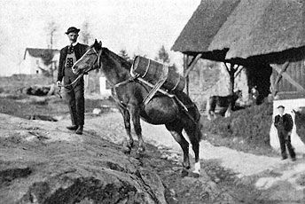 Half-Arabian El-Bedavi great-grandson, El-Bedavi XXII, was bred at the Austro-Hungarian stud at Radautz and was sire of the breed's foundation stallion, 249 Folie, born in 1874 in the Vinschgau. Folie's dam was a native Tyrolean mare of refined type. All Haflingers today must trace their ancestry to Folie through one of seven stallion lines (A, B, M, N, S, ST, and W) to be considered purebred.Provincial Federation of South. Img: The very first Haflinger. Tyrol Haflinger Horse Breeders.