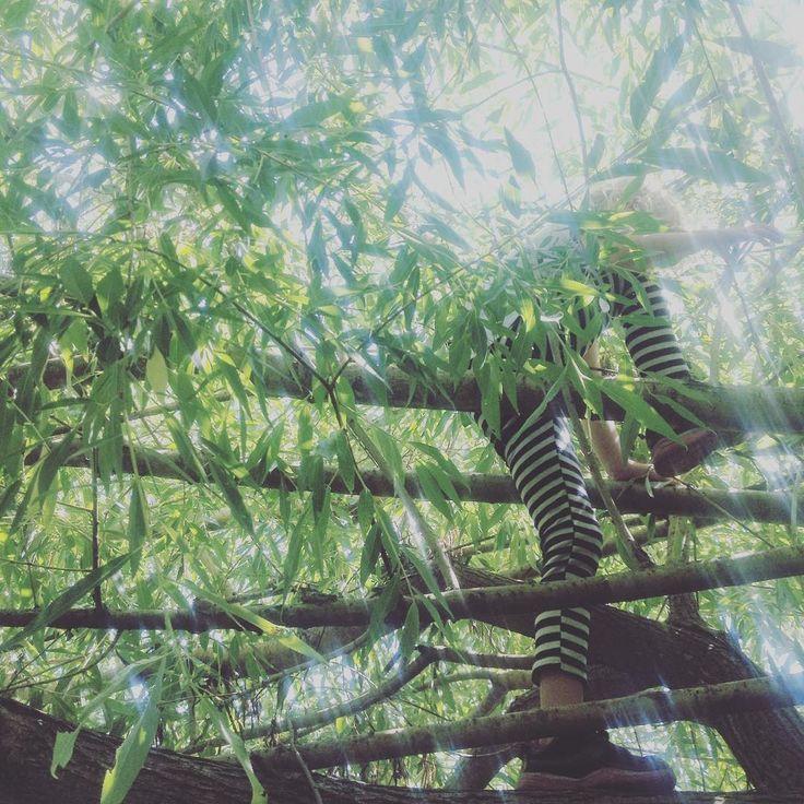 Tree Climbing in Fernie BC - Willow Tree