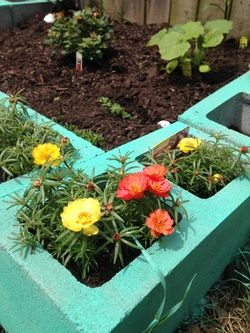 How to make a cinder block raised garden with color!