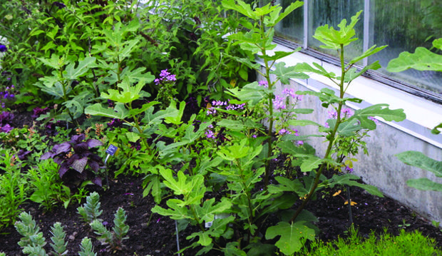 : Zammit Plants, Plants Pick, Paul Zammit