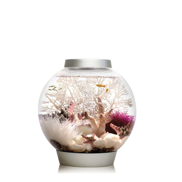 Best 25 10 gallon fish tank ideas on pinterest 1 gallon for 10 gallon fish bowl