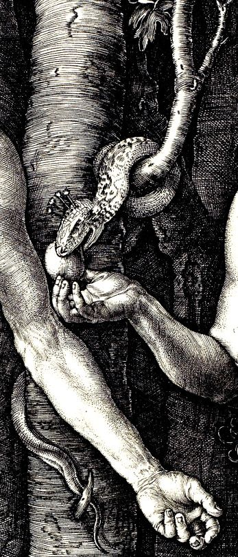 DÜRER, Albrecht (1471-1528)  Adam and Eve, detail 1504 Engraving Minneapolis Institute of Arts Ed. Orig.. Classic Art
