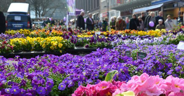 Wir machen mit!  Mit der neuen Veranstaltung Kiel blüht auf! wird das offizielle Frühjahrserwachen in Kiel eingeläutet. Von Pflanzen, Blumen, Outdoor- und Gartenzubehör ist für die Besucher alles zu finden, um den Winterschlaf zu beenden.