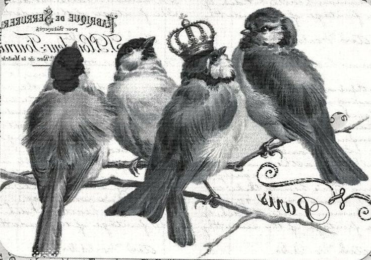 Birds - facilisimo.com