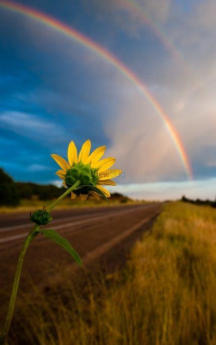 towards the rainbow